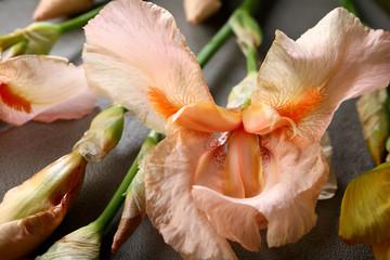 Iris bloom close-up