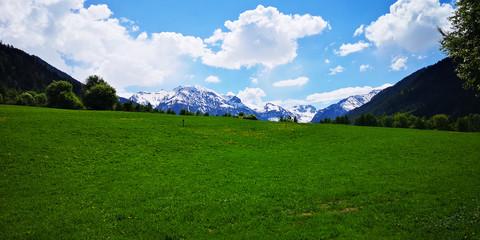 Alpenwiese vorm Berg