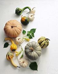 Heirloom Pumpkins