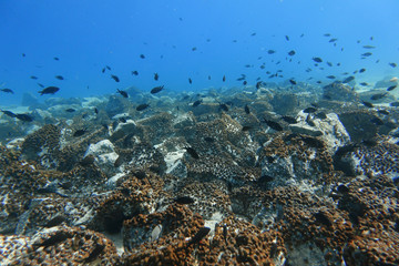 A shoal of fish is seen off the island of Salamina