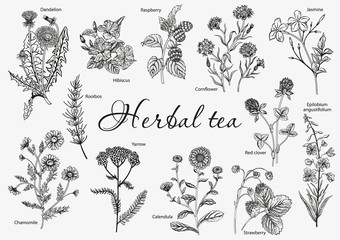 Wild flowers. Herbal tea. Vector illustration.