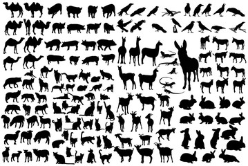vector, isolated silhouette of animals, collection
