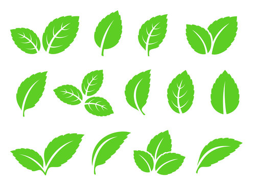 hand drawn abstract mint leaves set icons