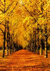 Herrenhäuser Gärten im goldenen Oktober / Herrenhausen Gardens in Indian summer