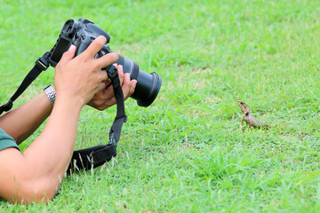 Photographer lying on the ground to take a picture of lizard