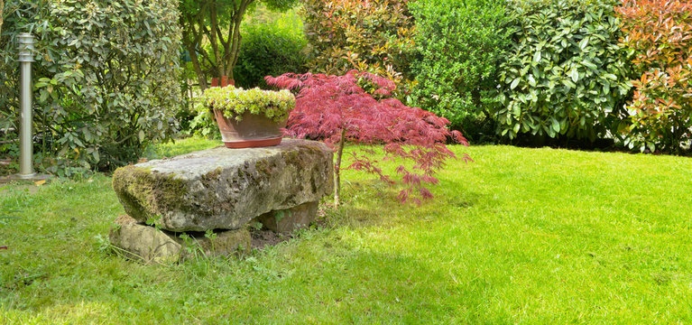 stone bench next to a Japan maple in an ornamental garden