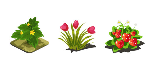Garden plants, tulips, strawberries, game user interface nature elements for video computer games vector Illustration