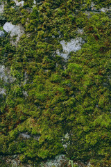 Green and bright background of plants, mosses and leaves