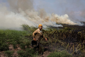 A local resident tries to extinguish a fire burning in Ogan Ilir, near Palembang, South Sumatra