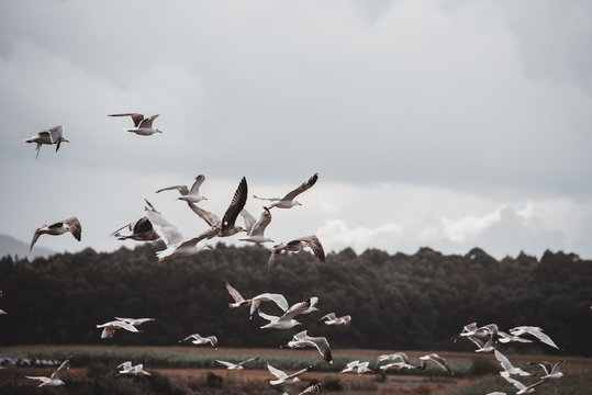Birds flying in green forest