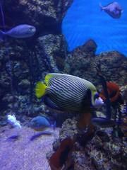 Aquarium in Moscow, 2018