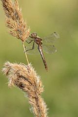 Dragonfly on the grass in the sunset on an autumn evening.