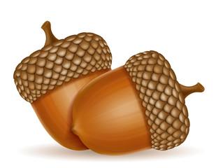 autumn oak acorns vector illustration
