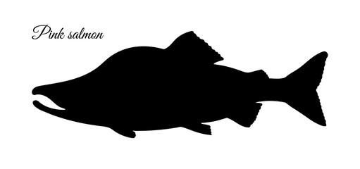 Silhouette of pink humpback salmon.