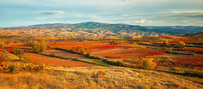 Landscape with vineyards in La Rioja
