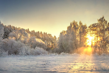 Vibrant Christmas winter landscape on sunrise. Warm sunlight in morning winter nature. Frost and fog in clear sunny morning. Frosty and snowy trees in shining sunbeams. Amazing nature background