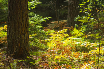 Forest nature background. Amazing autumn forest nature. Trees and plants in colorful woodland.