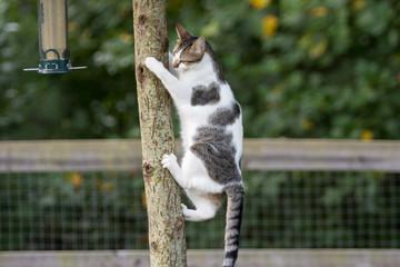 Curiosity go the cat