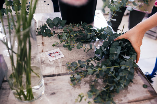 florist collects a bouquet of eucalyptus