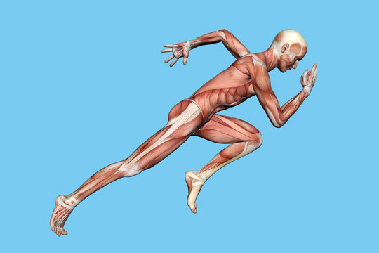 Anatomy of Man in Running Sprint Motion: Featuring coronal suture, maxilla and zygomatic bone, temporalis muscle, masseter muscle, orbicularis oculi muscle and zygomaticus major muscle.