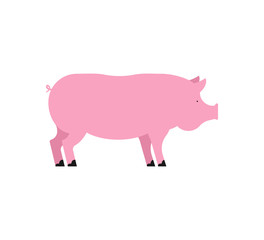 Pig isolated. Piglet pink. Swine Farm animal. Vector illustration