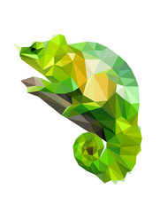 Colorful polygonal style design of wild reptile chameleon