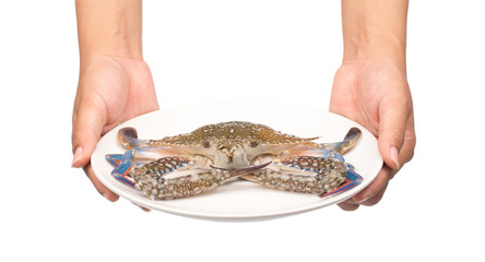 hand holding Fresh crab on a plate isolated on white background.
