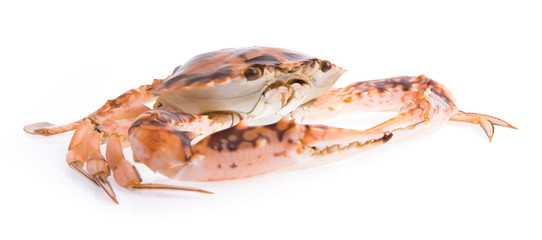 fresh crab isolated on white background