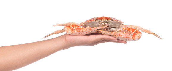 hand holding cooked crab prepared isolated on white background