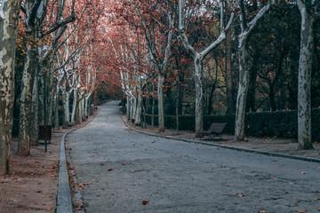 Garden  Madrid