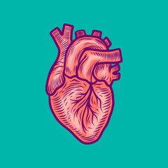 Anatomical heart icon. Hand drawn illustration of anatomical heart vector icon for web design