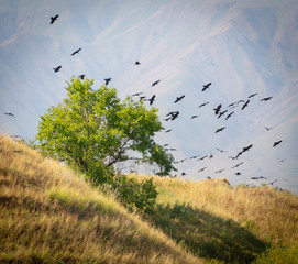 A tree and a hill with a lot of crows sitting and flying on it