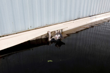 A cat clings to the side of a trailer amidst flood waters before it was saved as the Northeast Cape Fear River breaks its banks in the aftermath Hurricane Florence in Burgaw