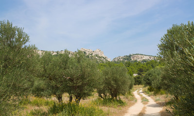 Photo sur Toile Oliviers Olivenhain in der Provence
