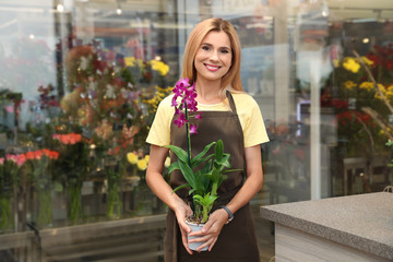 Female florist holding pot with plant in flower shop
