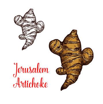 Jerusalem artichoke or topinambour vegetable