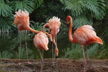 Photo of flamingos