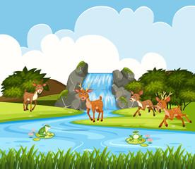 Deer in waterfall scene