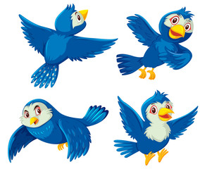 Set of blue birds