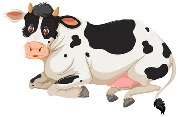 Happy cow laying down
