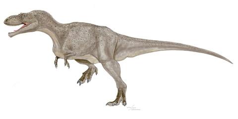 アレクトロサウルス・オルセニ(学名・小種名)アジアで最初に発見されたティラノサウルス科の獣脚類。。モンゴル自治区の白亜紀後期の地層から発見された。ティラノサウルス科としては脛骨がやや短く大腿骨とほぼ同じ長さである。やや原始的な中型の肉食恐竜。何体か描いたが、これは2018年に補修したイラスト画像。アレクトロは独身とか孤独のという意味がある。