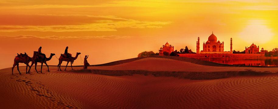 Camel caravan going through the desert.Taj Mahal during sunset