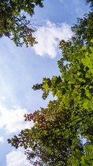 Vertical photo of the sky from inside the Regional Park of the Massif du Sud in Quebec, Canada.