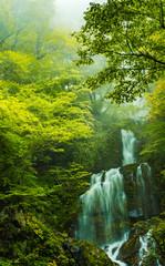 兵庫北西・霞立つ滝々