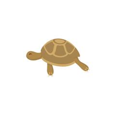 Turtle flat vector icon