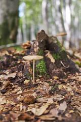 森に自生するキノコ