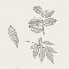 Endgraved vintage leafs illustrations