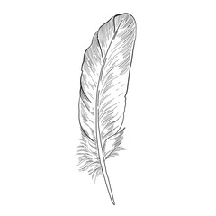 Hand drawn ink line art feather illustration. Vintage pen drawing.