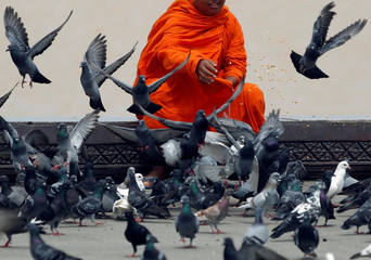 A Buddhist monk feeds birds at the river bank in front of the Royal Palace in Phnom Penh