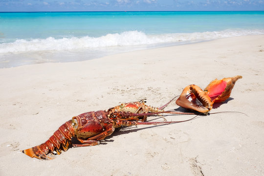 Lobsters and sea shells on a sandy beach on the background of the sea, the concept of recreation and tourism